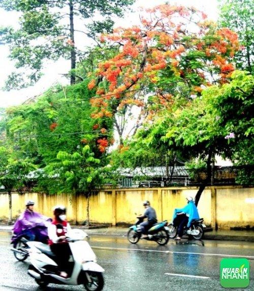 Mưa Sài Gòn (Ảnh: Internet)