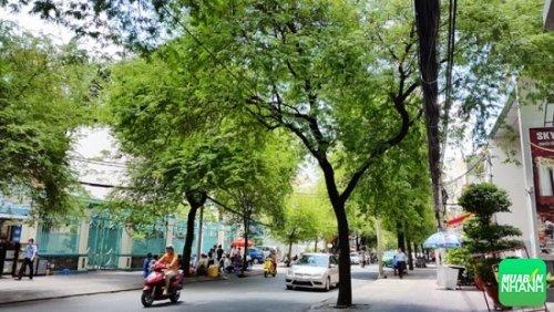 Hàng me xanh hai bên đường - Ảnh: Kim Thanh